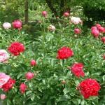Toronto Botanical Garden Flowers
