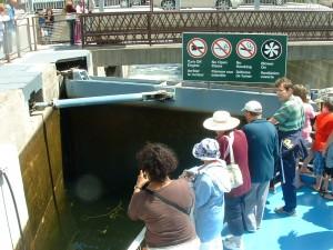 Fenelon Falls Lock on Trent-Severn Waterway