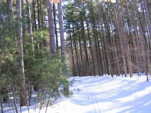 Cross Country Skiing through the woods at Horseshoe Resort
