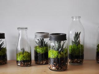 Terrariums from Crown Flora Studio at Leslieville Flea