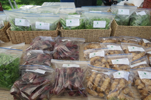 Beets from Cookstown Greens at Withrow Farmers Market