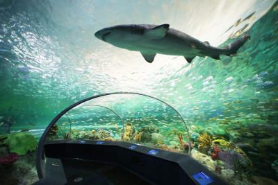 Dangerous Lagoon at Ripleys Aquarium of Canada