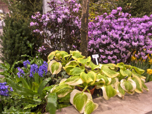 Garden at Canada Blooms by JulesDesign.ca