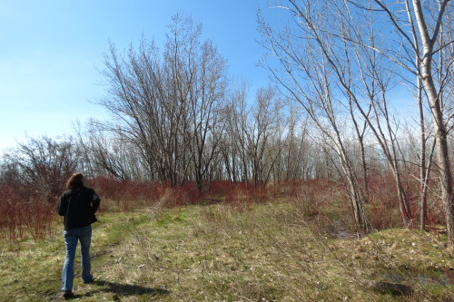 Karen McDonald of the TRCA leads us on a bird hike at Tommy Thompson Park