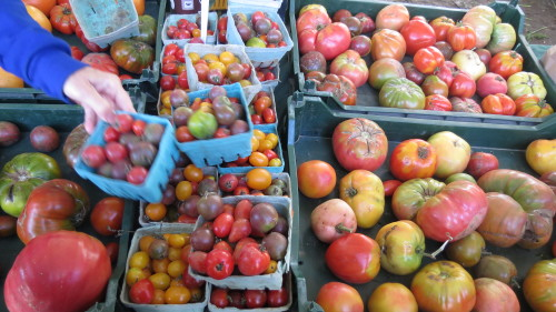 Heirloom Tomatoes from Haystrom Farm, Picton