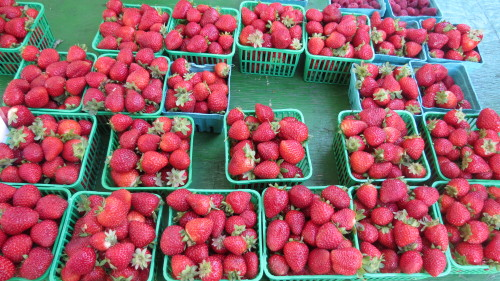 Strawberries from Bizjak Farms in Beamsville