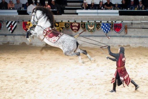 Andalusian horse leaps at Medieval Times