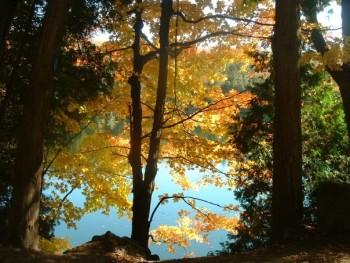 Crawford Lake Conservation Area, Milton