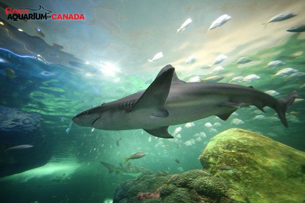 Dangerous Lagoon at Ripley's Aquarium
