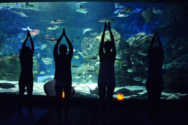 Morning Yoga at Ripley's Aquarium of Canada