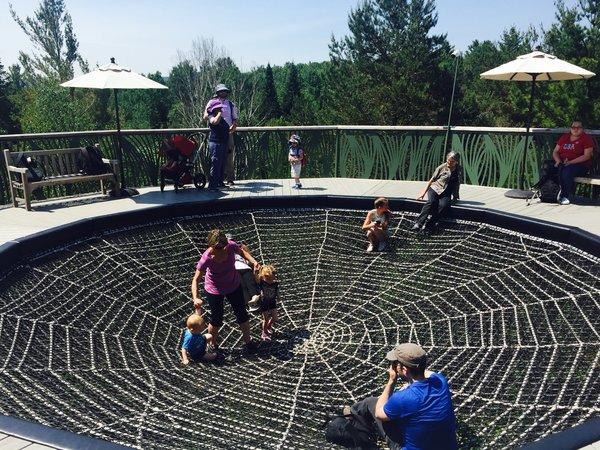 Spider's Web on The Wild Walk at The Wild Center