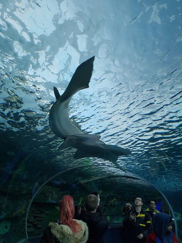 Visitors watch a stingray swim above them in the Dangerous Lagoon at Ripley's Aquarium of Canada in Toronto.