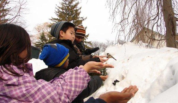 Winter Wander at Toronto Botanical Garden