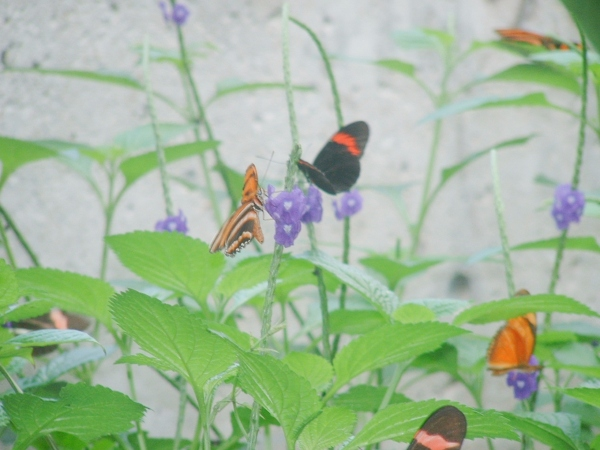 Butterfly Conservatory in Niagara Falls, Canada