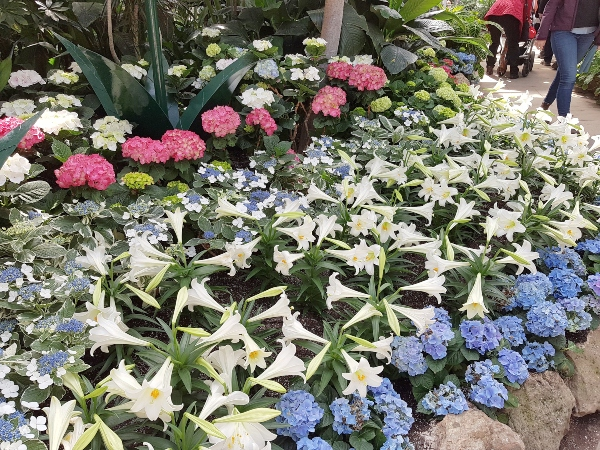 Lilies and hydrangeas are some of the best plants for east facing gardens.