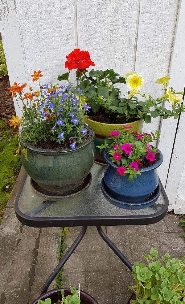 Gardening is one of the fun ways to enjoy summer 2020.