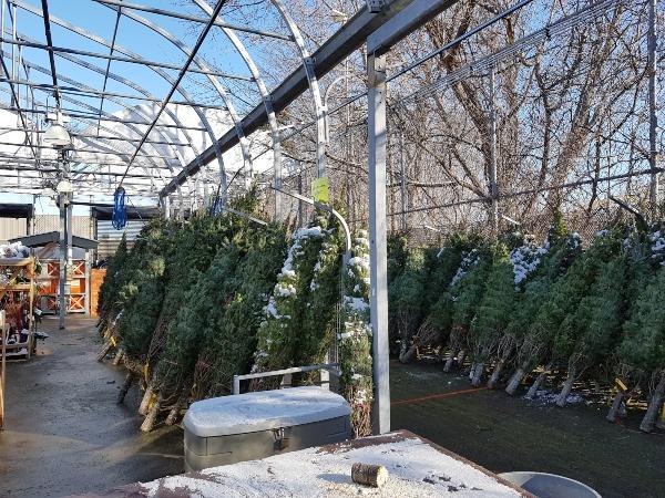 Buy a real Christmas tree at Home Depot