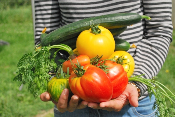 Read these tips for starting your vegetable garden early, photo credit jf-gabnor vegetables-742095_1920 on Pixabay